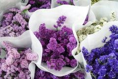 Цветки Statise с цветами разницы стоковая фотография
