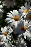 цветки sunbathed стоковые изображения rf