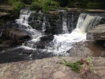 Цветки w водопада стоковые изображения