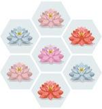 Цветки Waterlily установили сезон иллюстрации вектора картины флористический Стоковые Фото