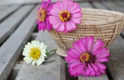 Цветки Zinnia на деревянной предпосылке Стоковые Фото