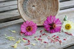 Цветки Zinnia на деревянной предпосылке Стоковое фото RF
