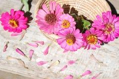 Цветки Zinnia на деревянной предпосылке Стоковые Изображения RF