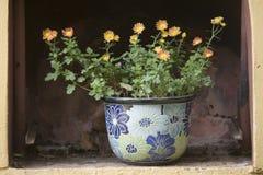 Цветковое растение в баке стоковое изображение