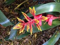 Цветковое растение Стоковые Фото