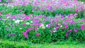 Цветковое растение Стоковое Фото