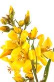 Цветковое растение Стоковое Изображение
