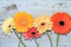 5 цветков на предпосылке Стоковое Изображение