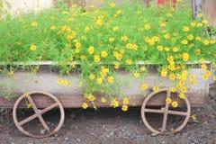 Цветков Сингапура украшения группа красочных желтых dailsy зацветая в ржавом стальном автомобиле стоковое изображение
