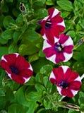 16 цветков Стоковые Изображения
