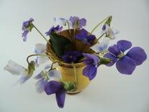 15 цветков sororia Виолы в вазе стоковые фотографии rf