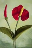 Цветк-Антуриум вязания крючком Стоковая Фотография