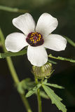 Цветк---час стоковое изображение