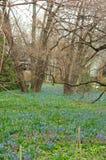 Цветник в вертикали леса Стоковое Фото