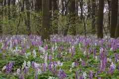 Цветник в лесе Стоковые Изображения RF