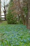 Цветник в vert леса Стоковая Фотография