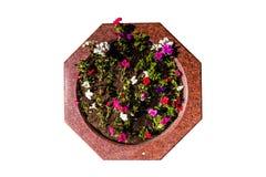 Цветник гранита декоративный с пестроткаными цветками стоковые изображения rf