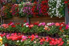 Цветник как флористическая предпосылка стоковое изображение rf