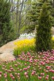 Цветник тюльпанов Стоковая Фотография RF