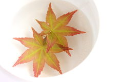 9 цветов осени стоковые изображения rf