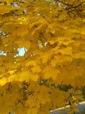 9 цветов осени Стоковая Фотография RF