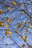 9 цветов осени Стоковое Изображение