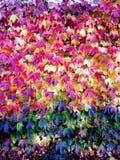 9 цветов осени Стоковые Изображения