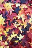 9 цветов осени стоковые фотографии rf