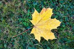 9 цветов осени Стоковая Фотография
