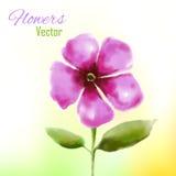 Цветок акварели Стоковые Фотографии RF