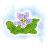 Цветок акварели Стоковое Изображение