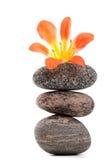 цветок амарулиса красивейший близкий вверх Стоковая Фотография