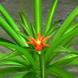 Цветок ананаса Стоковое Изображение