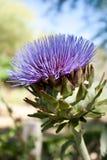 цветок артишока стоковое изображение