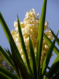 Цветок ладони Стоковое Изображение RF