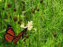 цветок бабочки летая к Стоковая Фотография RF