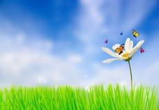 цветок бабочки подавая Естественная предпосылка Стоковые Фото