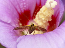 цветок бабочки подавая Стоковая Фотография RF