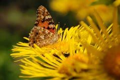 цветок бабочки сидит Стоковая Фотография RF