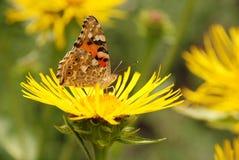 цветок бабочки сидит Стоковая Фотография