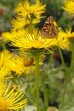цветок бабочки сидит Стоковые Изображения