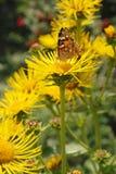 цветок бабочки сидит Стоковые Фото