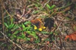 цветок бабочки цветастый Стоковое Изображение RF