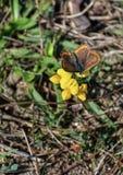 цветок бабочки цветастый Стоковые Изображения RF