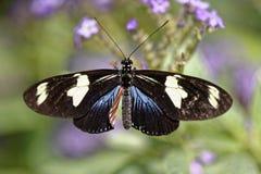 цветок бабочки цветастый Стоковая Фотография