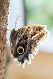цветок бабочки цветастый Стоковое фото RF