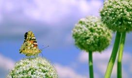 цветок бабочки стоковая фотография