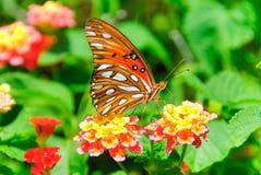 цветок бабочки Стоковые Изображения