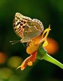цветок бабочки стоковые фото