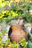Цветок бака глиняного кувшина Стоковое фото RF